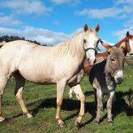 donkey horses