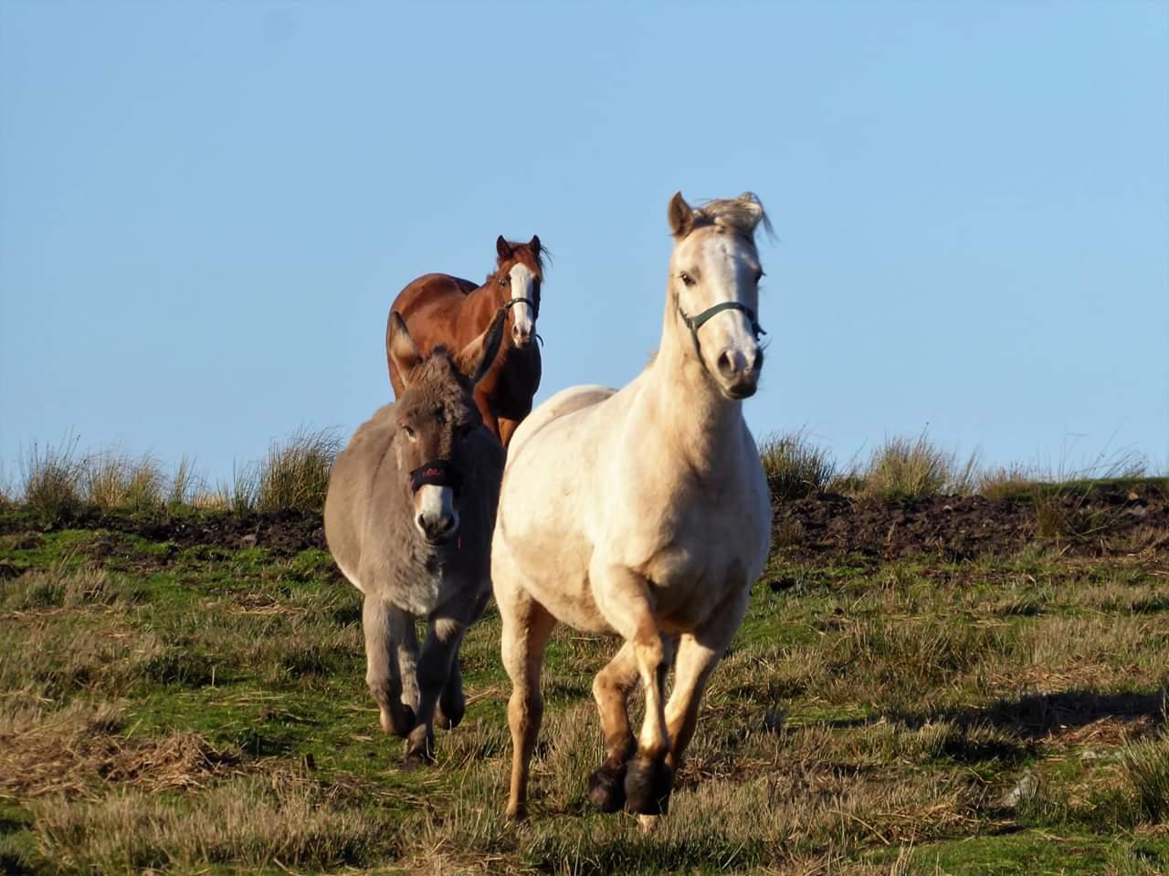 horses donkey