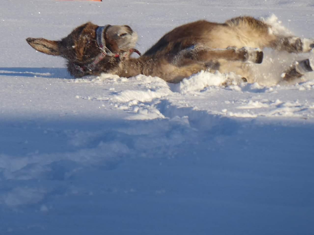donkey snow
